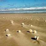 Der Strand ist wunderschön, hier mit Muscheln geschmückt.