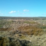 Hinter den Dünen sahen wir Wildpferde. Wer findet eines im Bild?